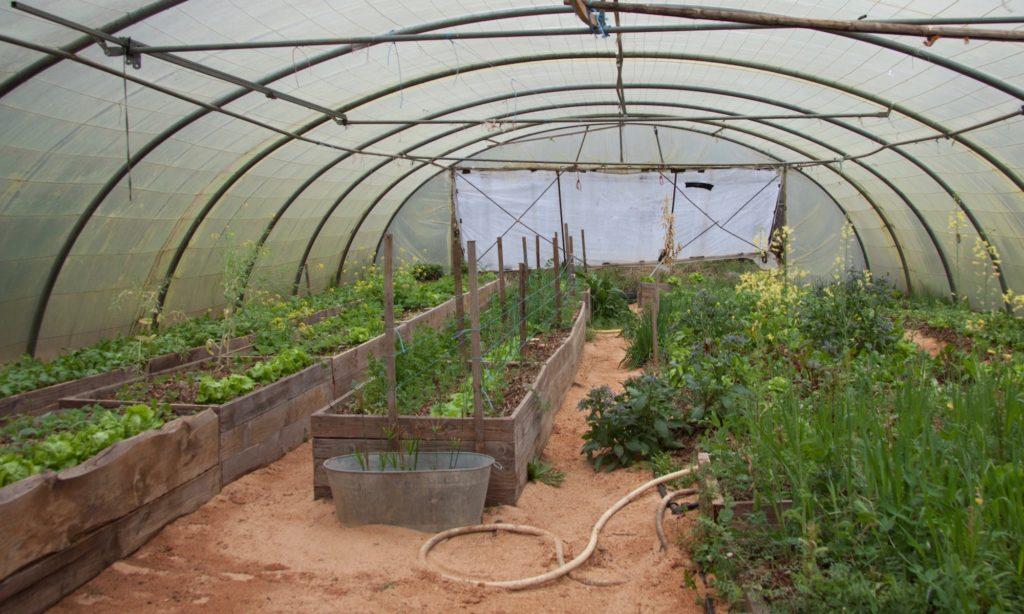 cette serre de 200 m2 permet de produire nos propres plants à partir du semis des graines issues du jardin